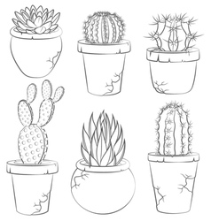 collection cactuses in flower pot vector image
