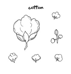 Cotton flower hand drawn vector