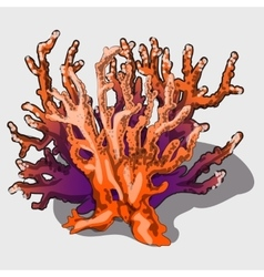 Dry branches of exotic plants dried coral vector