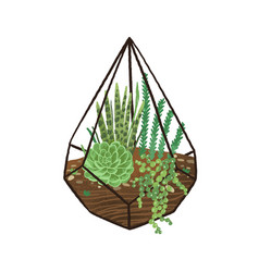 glass geometric florarium with green succulents in vector image