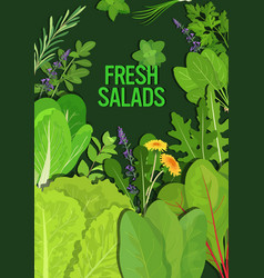 mix different fresh salads leaves healthy vector image