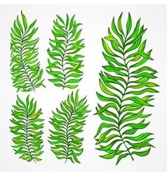 Set exotic foliage vector