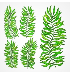 Set of exotic foliage vector image