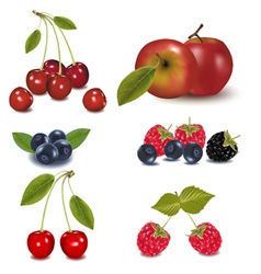 berries and an apple vector image vector image