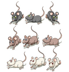 A group of mice vector
