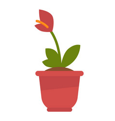 Calla plant in flowerpot isolated on white vector