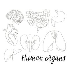 different human organs set vector image