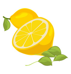 Fresh lemons with leaves vector
