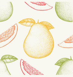ink hand drawn pomelo background vector image