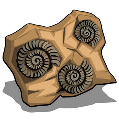 Set of fossilized shell of ammonite isolated on a vector