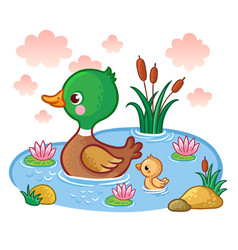 a duck with ducklings floats on the lake vector image vector image