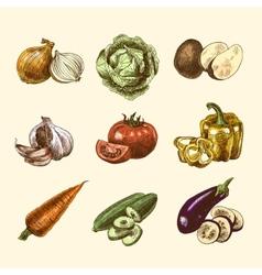 Vegetables sketch set color vector image vector image