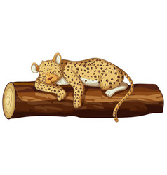 cheetah sleeping on log vector image