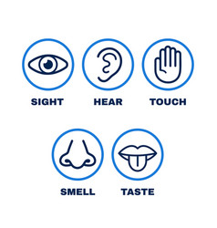 line icon set of five human senses vector image
