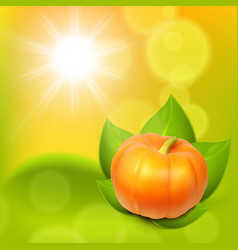 Sunny background with pumpkin in leaves vector