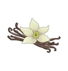 Vanilla colored botanical vector