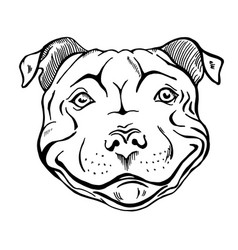 smiling dog face portrait vector image
