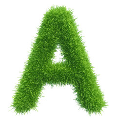 Capital letter a from grass on white vector