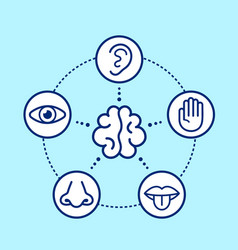 Five human senses surrounding brain vector