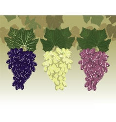 Grapes clusters set vector