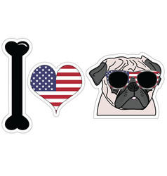 I love pug with american symbols vector image
