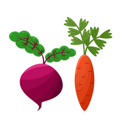 purple beetroot and orange carrot icons vector image