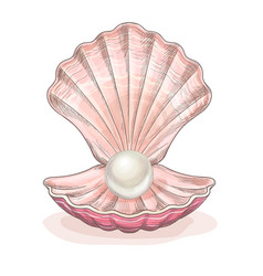 White pearl in opened clam pink seashell vector