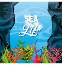Coral and algae icon Sea life design vector