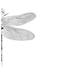 elegant partial dragonfly insect detailed sketch vector image