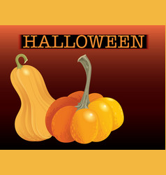 Halloween pumpkin set two orange gourds isolated vector
