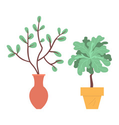 Houseplants in pots or vases plants foliage vector