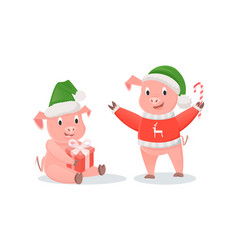 new year pigs in santa hats gift and cane candy vector image