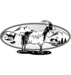 Oval frame with goats grazing vector