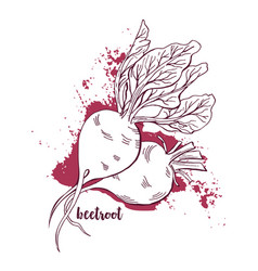 Beetroots watercolor hand drawn vegetables white vector