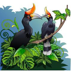 Burung enggang or rangkong vector
