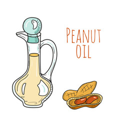 colorful hand drawn peanut oil bottle vector image