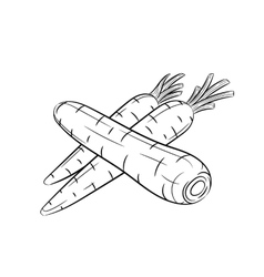 Hand drawn carrot sketches on white background vector image
