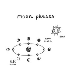 Hand drawn moon phases scheme sketch lunar phases vector