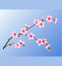 Peach blossom branch vector