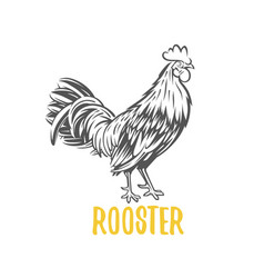 rooster vector image