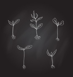 sprouts young plants hand drawn vector image