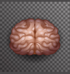 Human brain realistic 3d poster transparent vector
