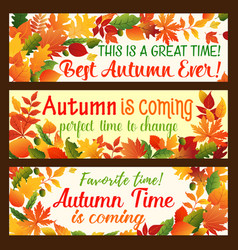 Autumn leaf banner fall nature season border set vector