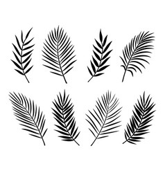 Black isolated palm leaves and branches on white vector