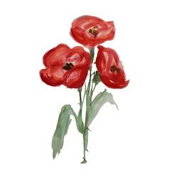 watercolor poppies vector image