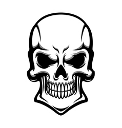 Danger human skull with eerie grin vector image