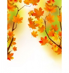 Autumn maple leaves in sunlight vector