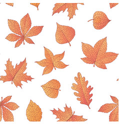 autumn seamless pattern with oak maple beech vector image