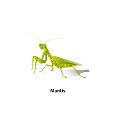 Green mantis rice vector