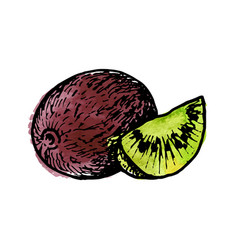 ink drawing kiwi vector image